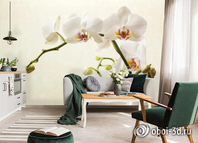 3D Фотообои «Белая орхидея» вид 7