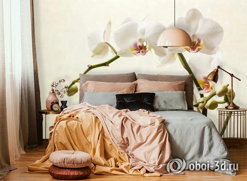 3D Фотообои «Белая орхидея» вид 6