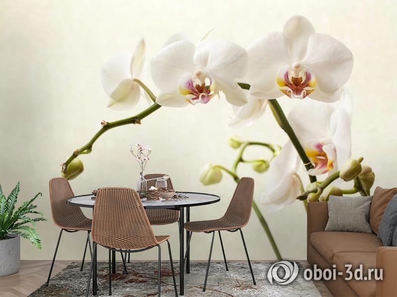 3D Фотообои «Белая орхидея» вид 2