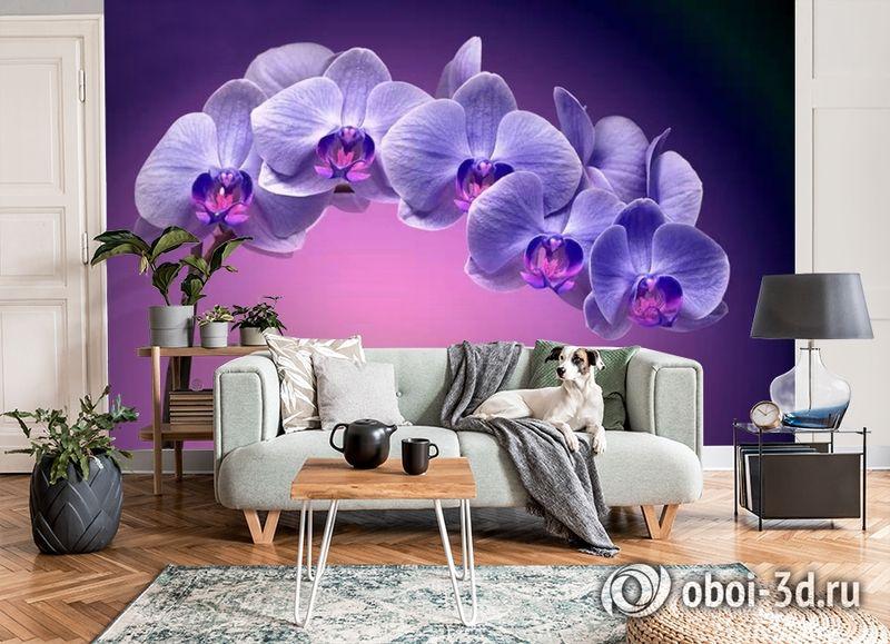 3D Фотообои «Фиолетовая орхидея» вид 8
