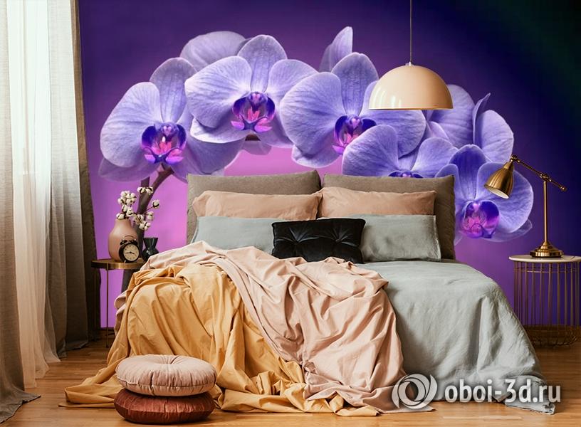 3D Фотообои «Фиолетовая орхидея» вид 6