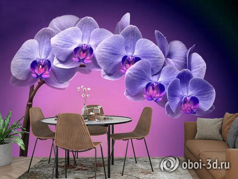 3D Фотообои «Фиолетовая орхидея» вид 2