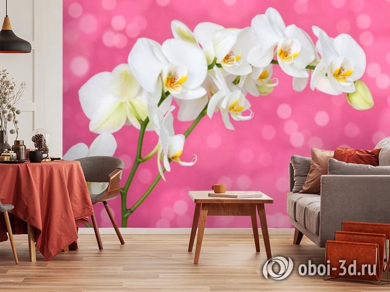 3D Фотообои «Белая орхидея на розовом фоне» вид 5