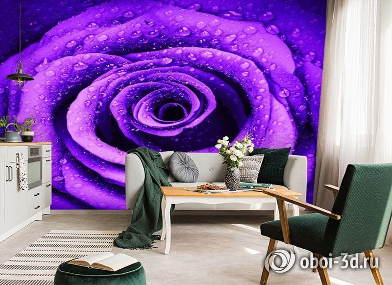 3D Фотообои «Фиолетовая роза с каплями» вид 7