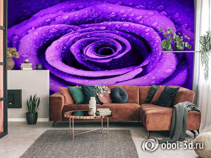 3D Фотообои «Фиолетовая роза с каплями» вид 3