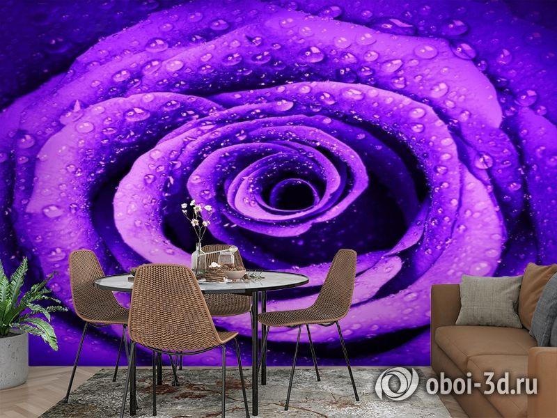 3D Фотообои «Фиолетовая роза с каплями» вид 2