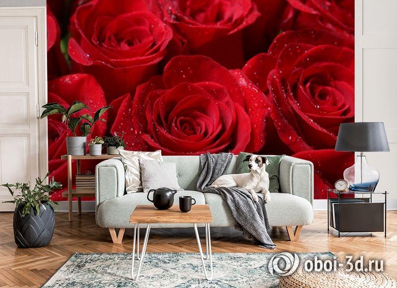 3D Фотообои «Бархатные розы в каплях утренней росы» вид 8