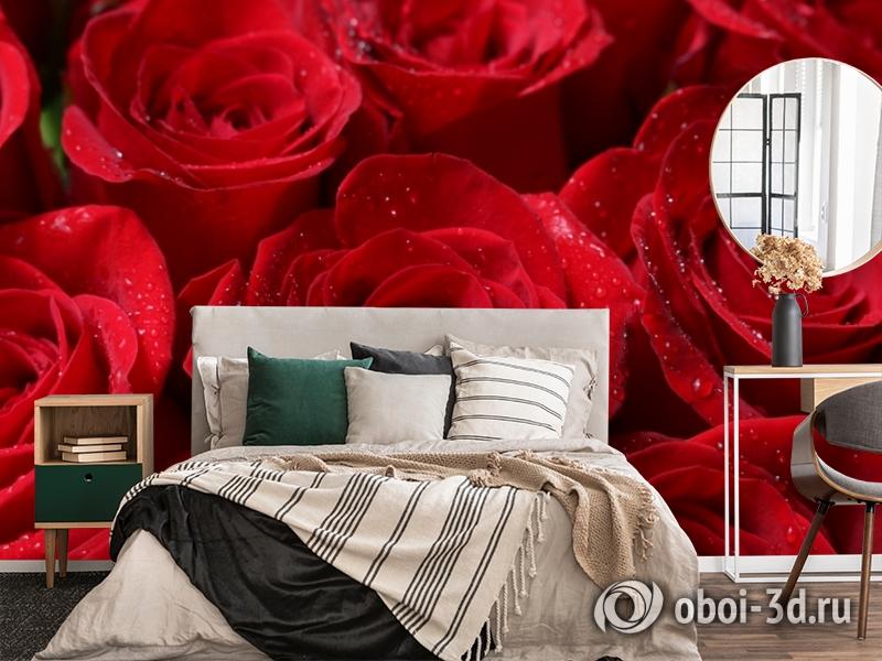 3D Фотообои «Бархатные розы в каплях утренней росы» вид 4