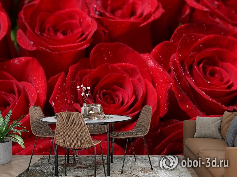 3D Фотообои «Бархатные розы в каплях утренней росы» вид 2