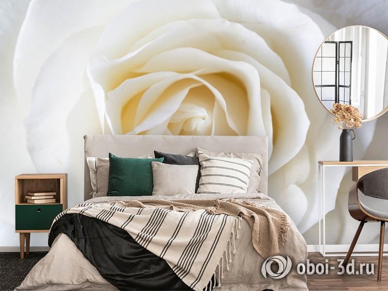 3D Фотообои «Белая нежность» вид 4