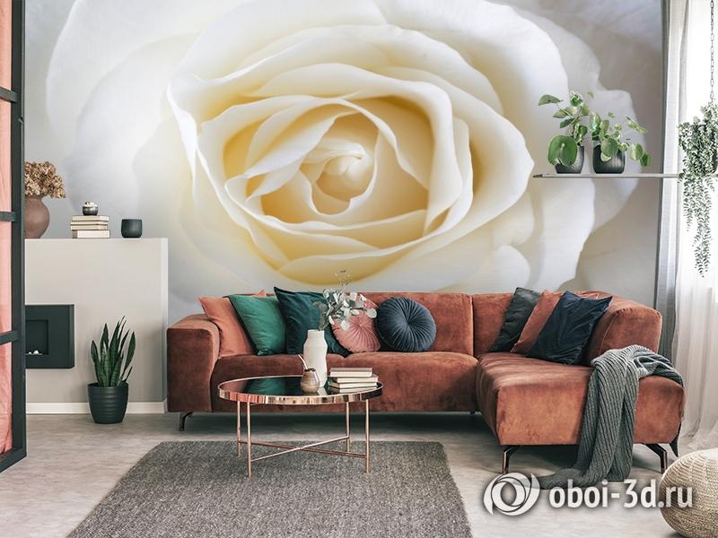 3D Фотообои «Белая нежность» вид 3