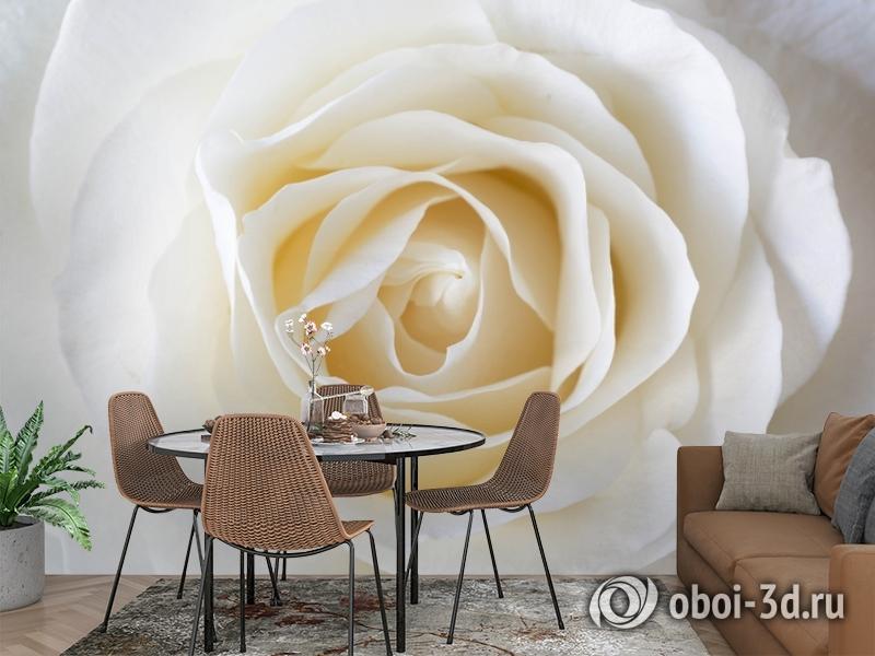 3D Фотообои «Белая нежность» вид 2