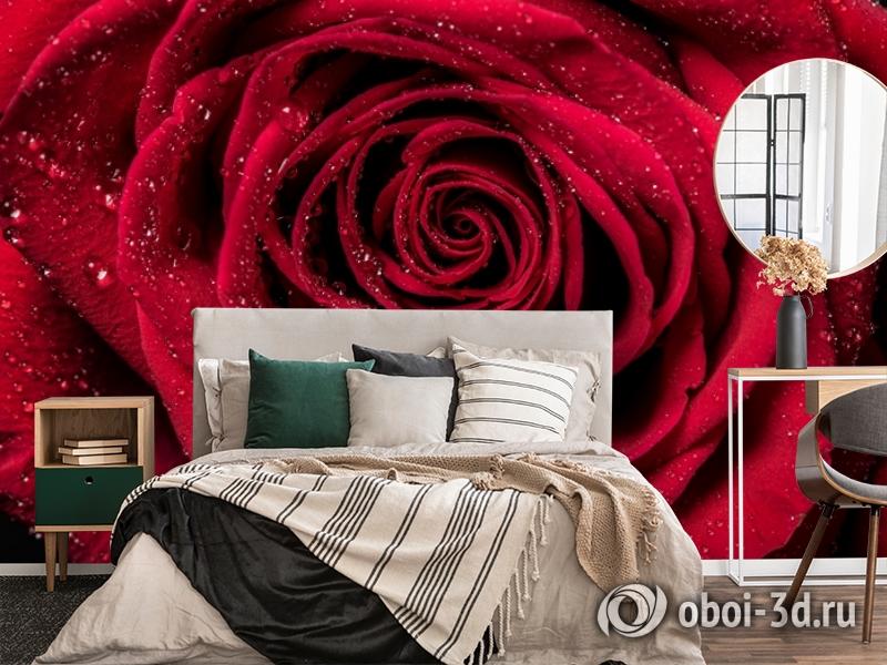 3D Фотообои «Большая роза в росе» вид 4