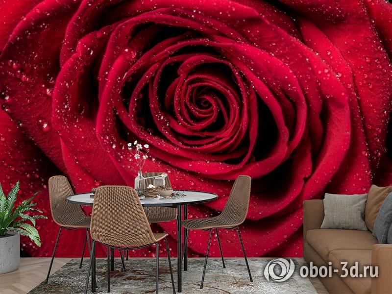 3D Фотообои «Большая роза в росе» вид 2