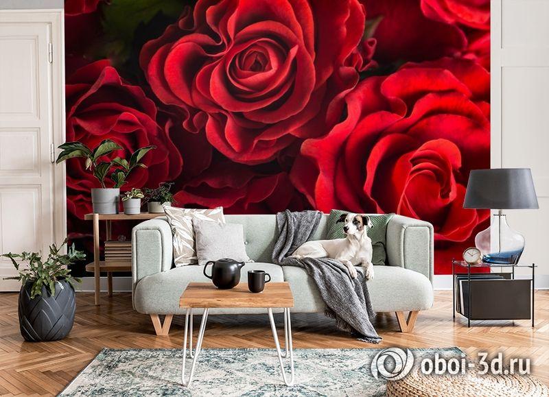 3D Фотообои «Бордовые розы» вид 8