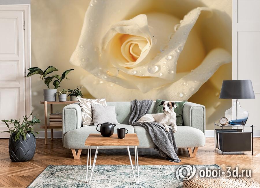 3D Фотообои «Утренняя роза» вид 8
