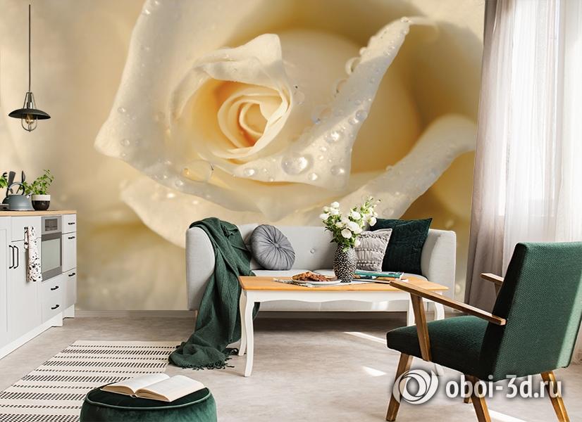 3D Фотообои «Утренняя роза» вид 7