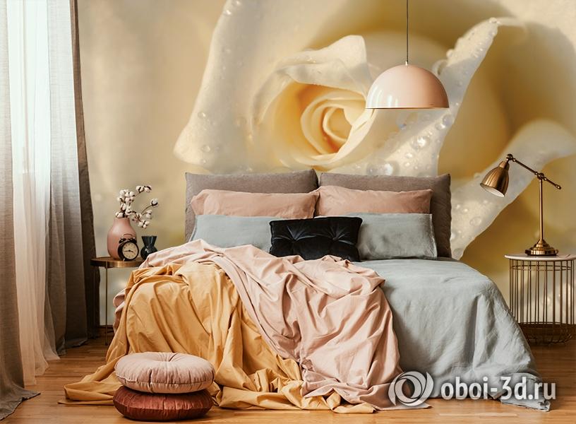 3D Фотообои «Утренняя роза» вид 6