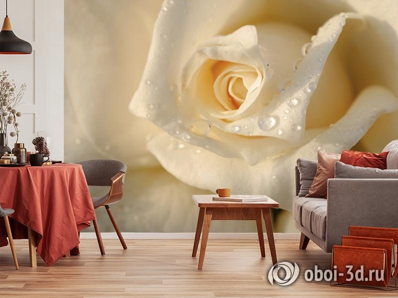 3D Фотообои «Утренняя роза» вид 5