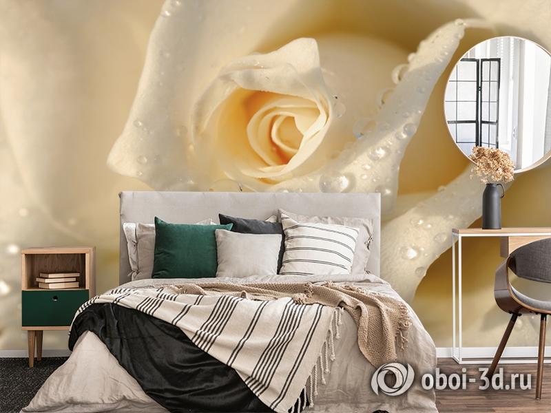 3D Фотообои «Утренняя роза» вид 4