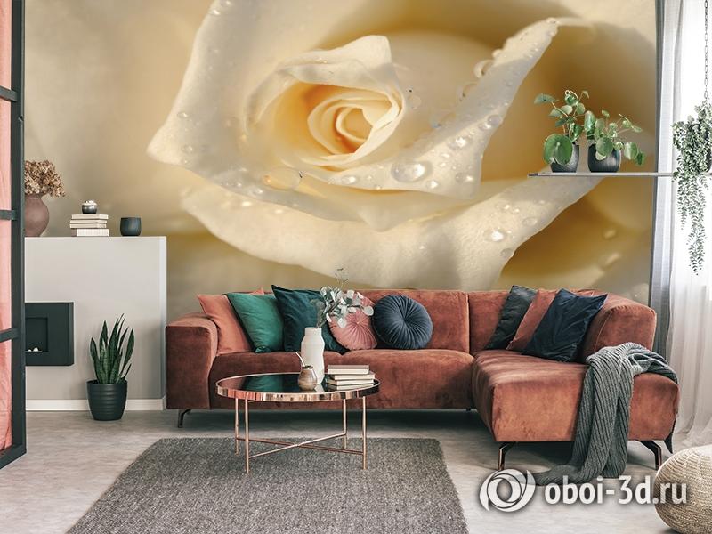3D Фотообои «Утренняя роза» вид 3