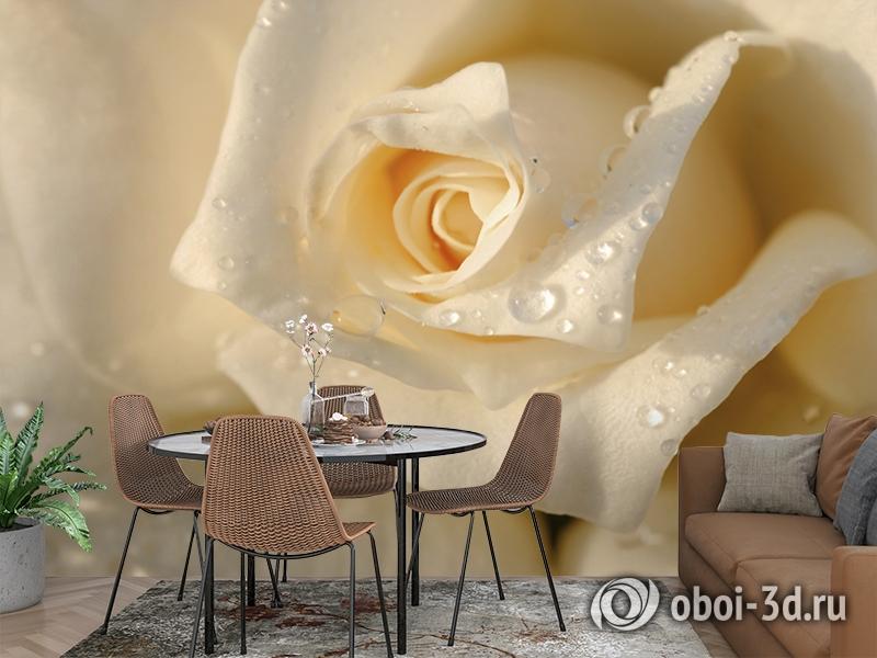 3D Фотообои «Утренняя роза» вид 2