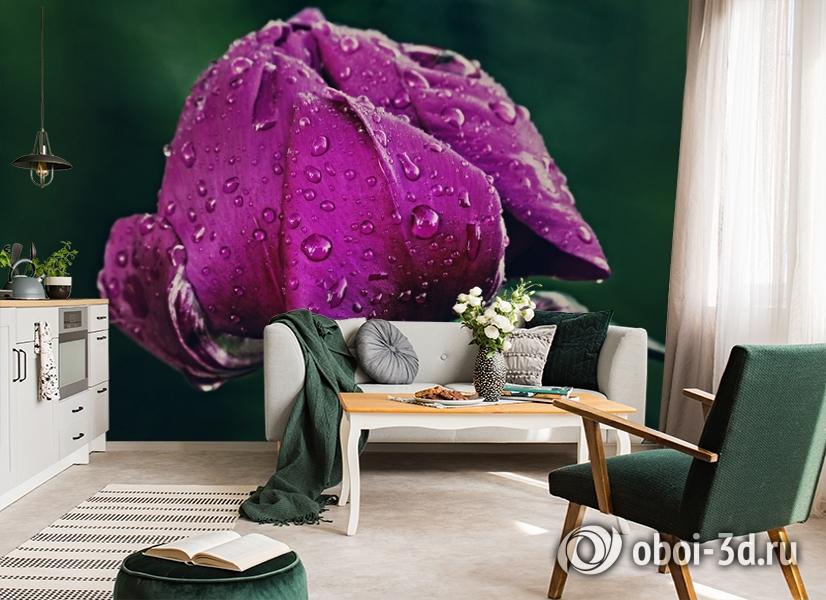 3D Фотообои «Пион после дождя» вид 7