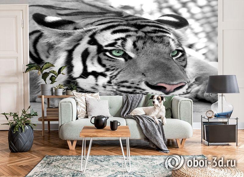 3D Фотообои  «Тигр черно-белые»  вид 6