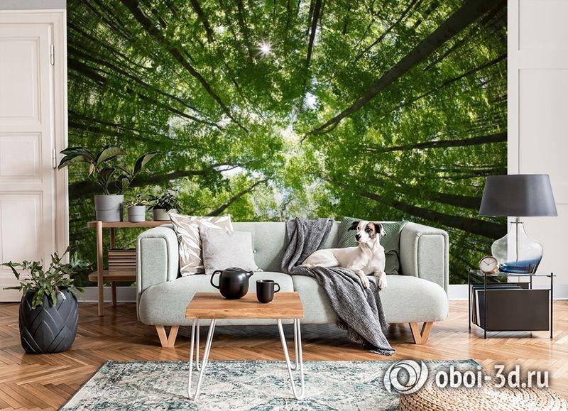 """3D Фотообои  """"Высокие деревья""""  Природа вид 7"""