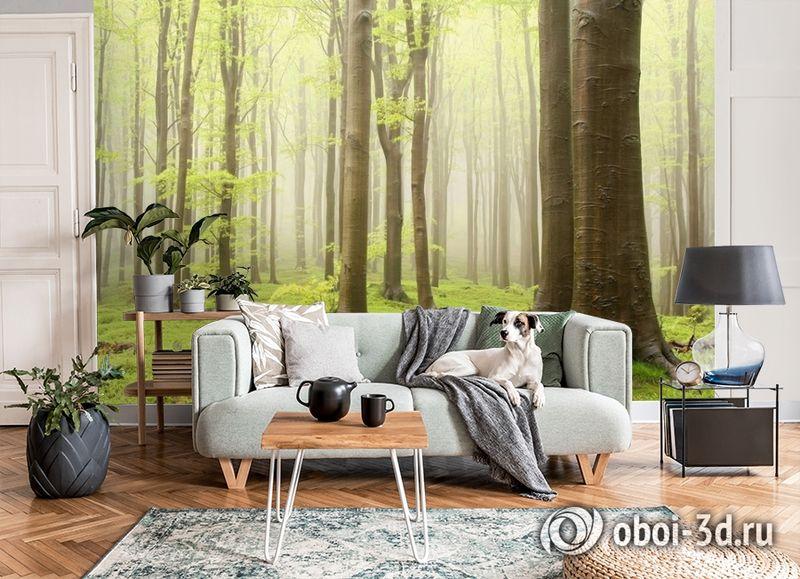 3D Фотообои  «Зеленый лес»  вид 7
