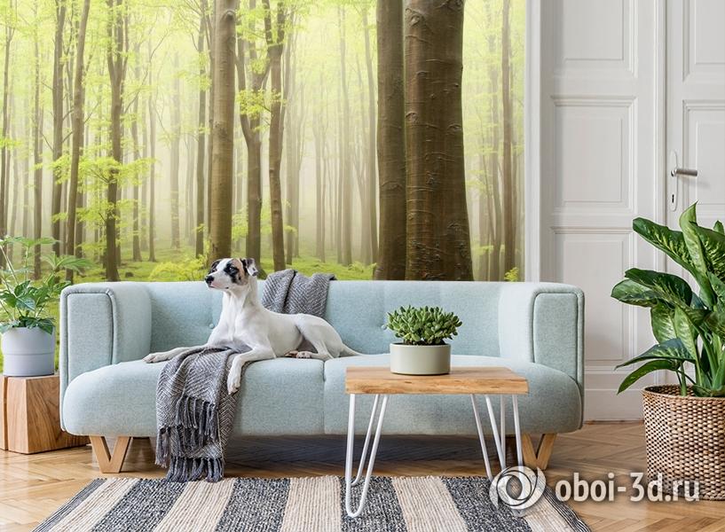 3D Фотообои  «Зеленый лес»  вид 2