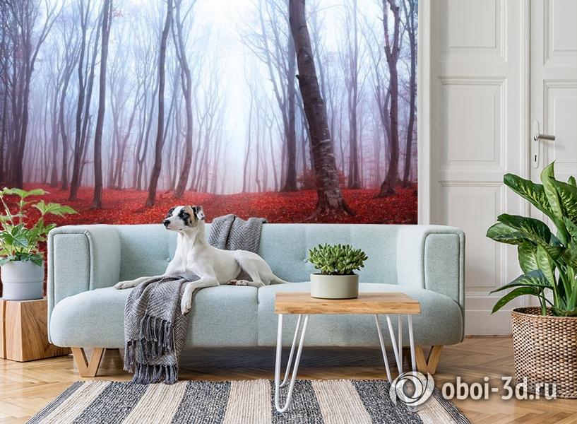 3D Фотообои  «Осенний лес в тумане»  вид 2