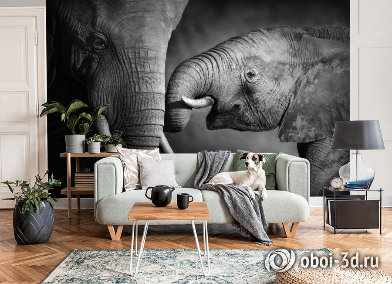 3D Фотообои  «Слоны»  вид 6