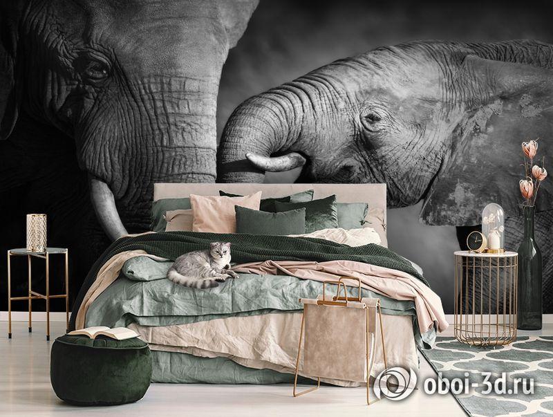 3D Фотообои  «Слоны»  вид 3