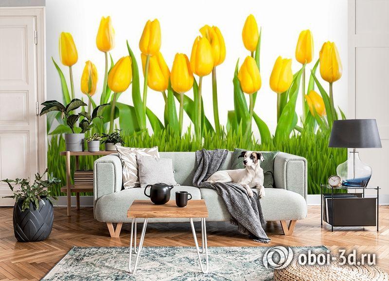 3D Фотообои «Желтые тюльпаны» вид 8