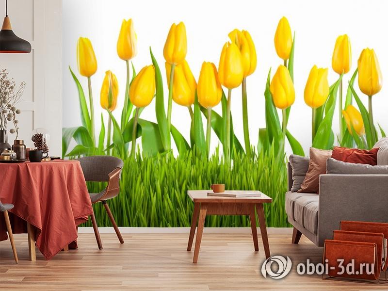 3D Фотообои «Желтые тюльпаны» вид 5