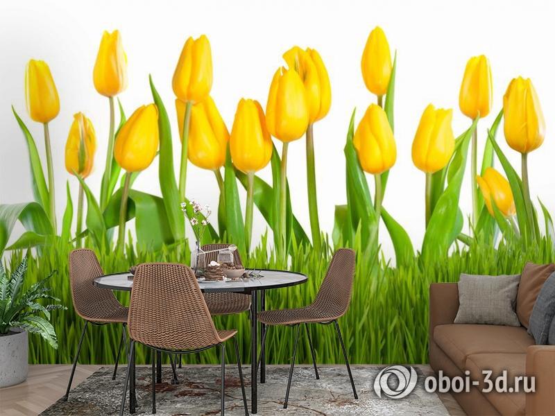 3D Фотообои «Желтые тюльпаны» вид 2