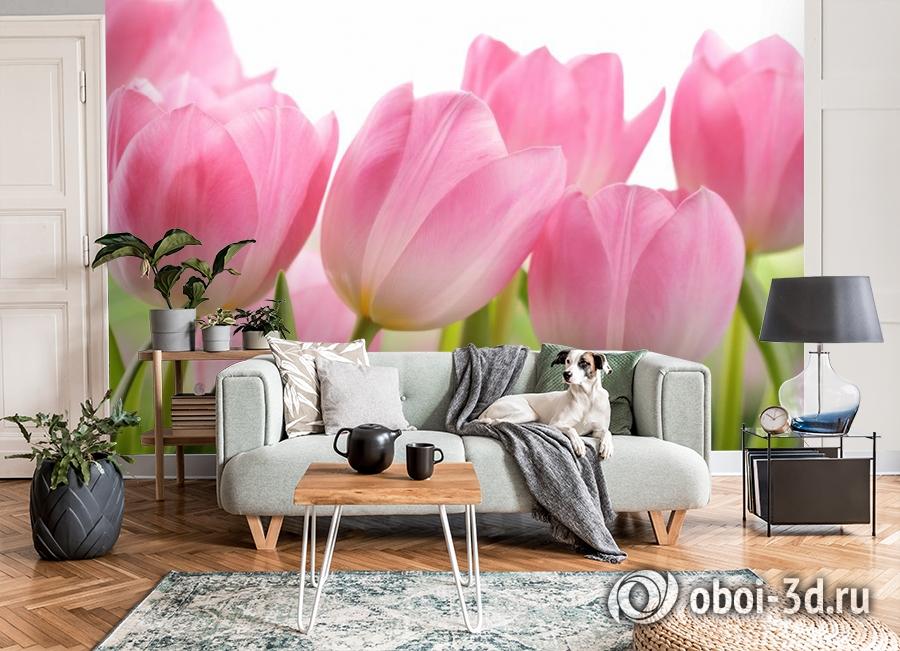 3D Фотообои «Крупные розовые тюльпаны» вид 8