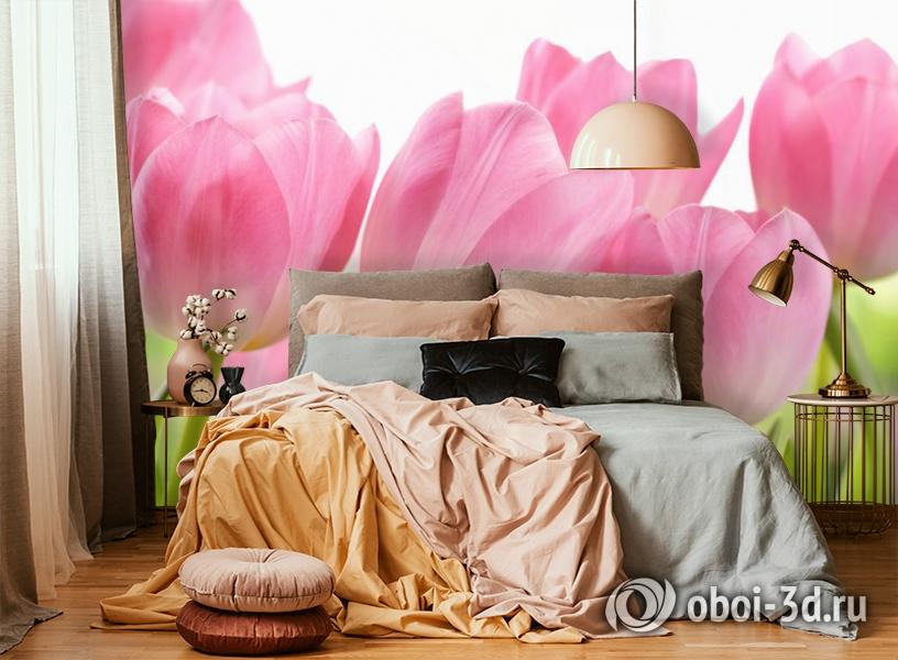 3D Фотообои «Крупные розовые тюльпаны» вид 6