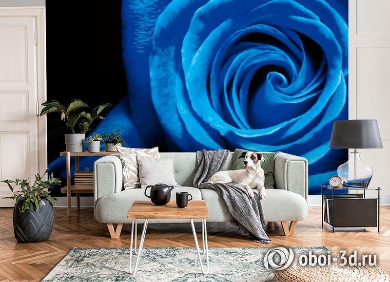 3D Фотообои  «Синяя роза» вид 8