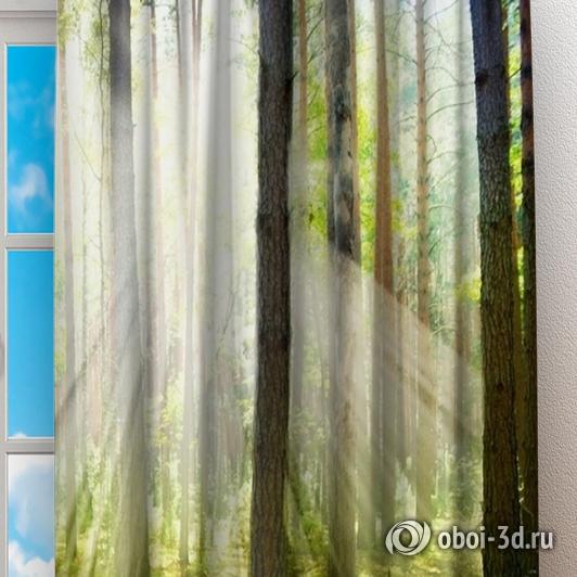 Фотошторы «Солнечный лес» вид 2