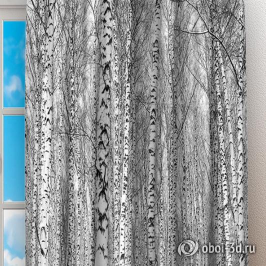 Фотошторы «Березы зимой» вид 2