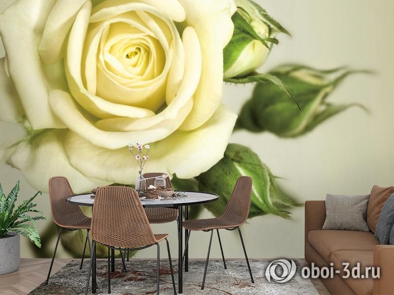 3D Фотообои  «Бежевая роза»  вид 2