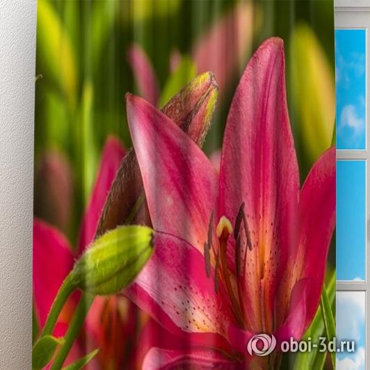 Фотошторы «Клумба розовых лилий» вид 3