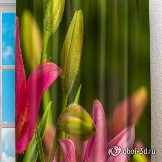 Фотошторы «Клумба розовых лилий» вид 2