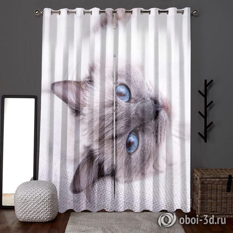 Фотошторы «Голубоглазая кошка» вид 6