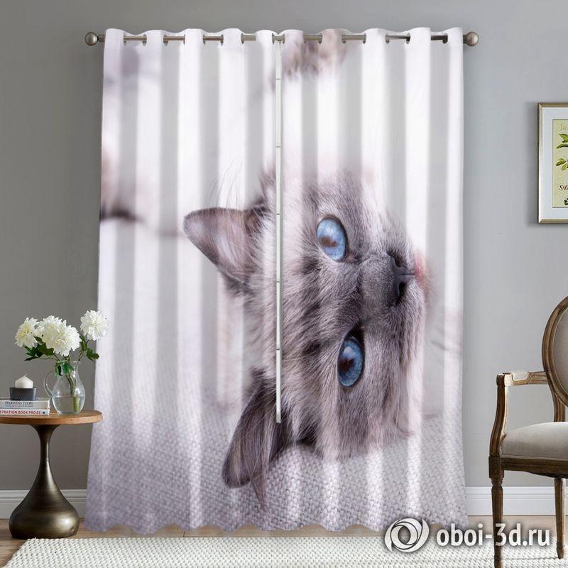 Фотошторы «Голубоглазая кошка» вид 5