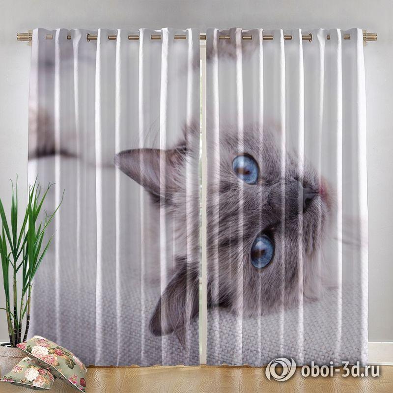 Фотошторы «Голубоглазая кошка» вид 4