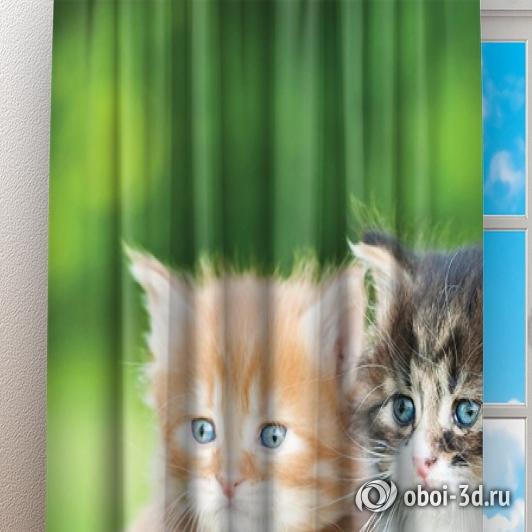 Фотошторы «Котятки» вид 3