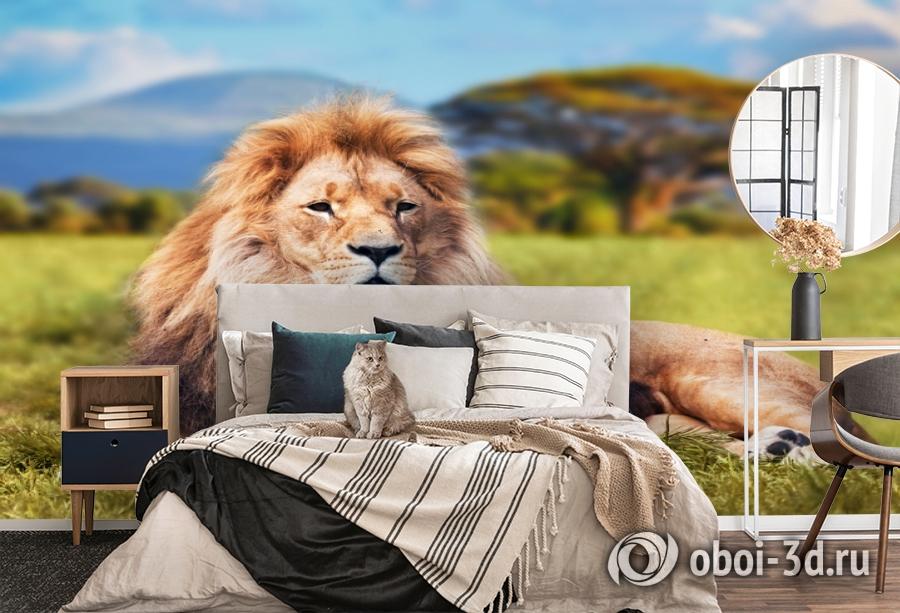 3D Фотообои  «Лев»  вид 5